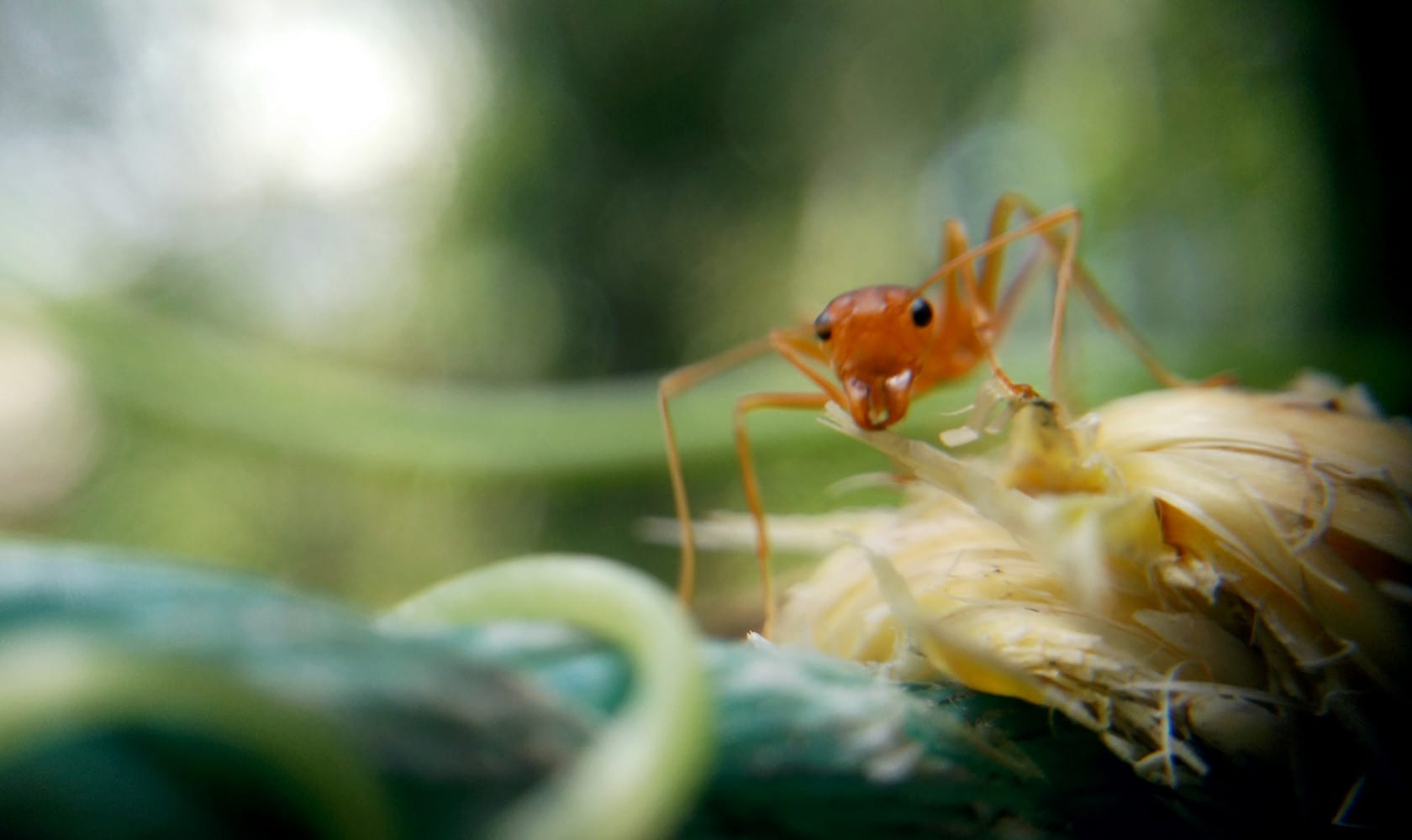 ant-1838540_1920