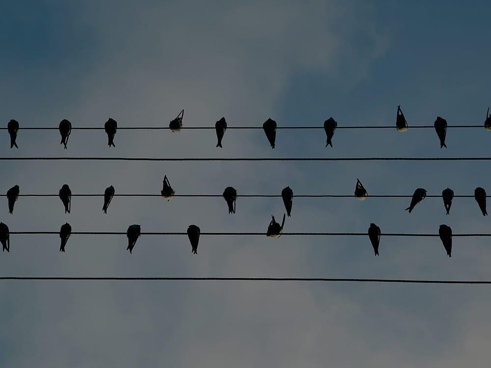 Ellun Kanat linnut orrella